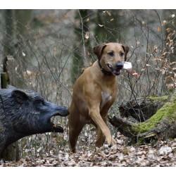 Jagdkontrolle Workshop Nachmittag