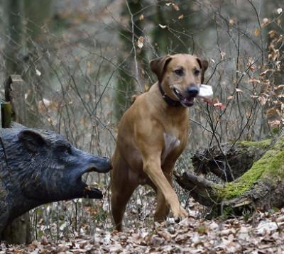 Jagdkontrolle